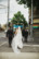 photograph of bridal party crossing the road on the way to wedding reception